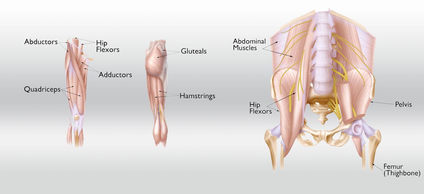 Hip Strain Description Causes Treatment Bouldercentre For